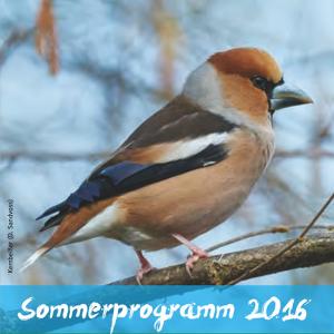 OVH Sommerprogramm-2016