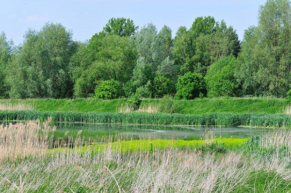 Baddeckstedt mit Innerste Uferzone