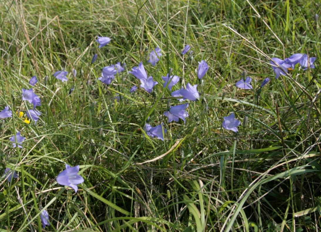 Ein Bild, das Gras, draußen, Blume, Pflanze enthält. Automatisch generierte Beschreibung