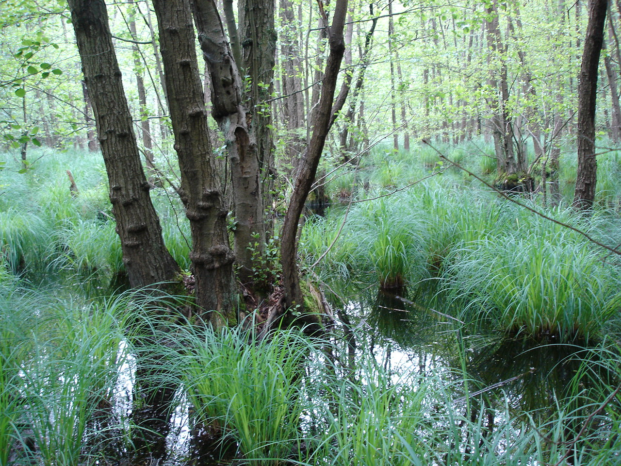 Ein Bild, das Gras, draußen, Pflanze, Wald enthält. Automatisch generierte Beschreibung