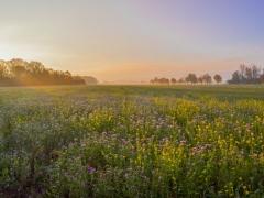 Feld in herbstlichen Morgensonne, Marienburg Hildesheim