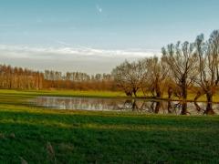 Leine Überschwemmung bei Schliekum 2017
