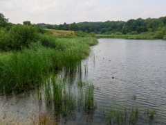 Giesener Teich, Juli