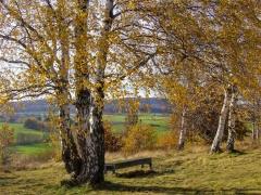 """Herbstliche NSG """"Schwarze Heide"""" Barienrode"""