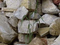 Lebenspendende Steine bei Adlum